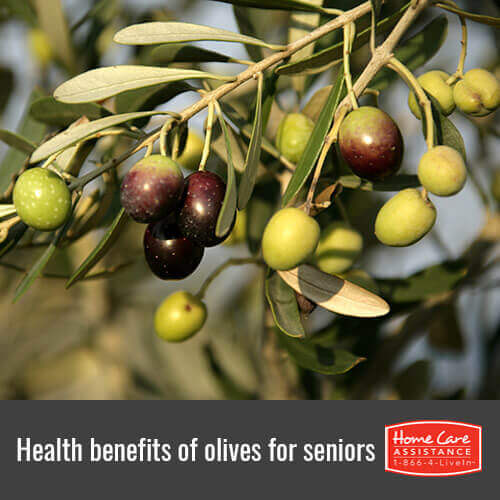 Why Seniors Should Eat Olives in Roseville, CA
