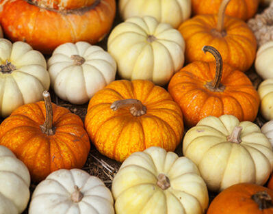 6 Halloween Activities for Aging Adults to Engage in in Roseville, CA